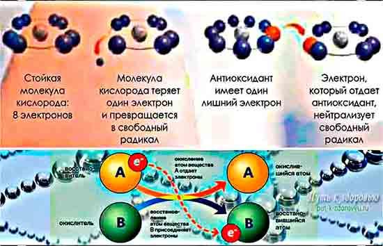 Как антиоксидант нейтрализует свободный радикал