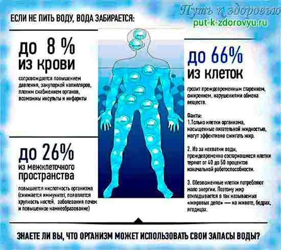 Откуда организм берёт запасы воды?