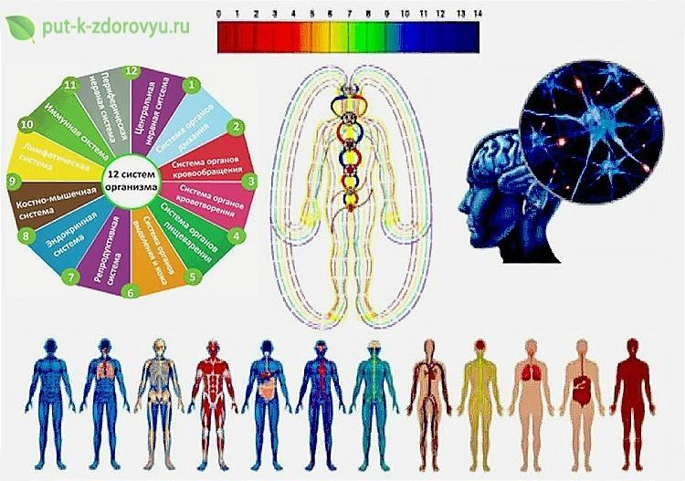 Организм человека - это целостная саморегулирующая система