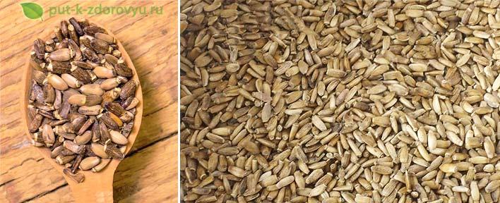 Семена расторопши-2
