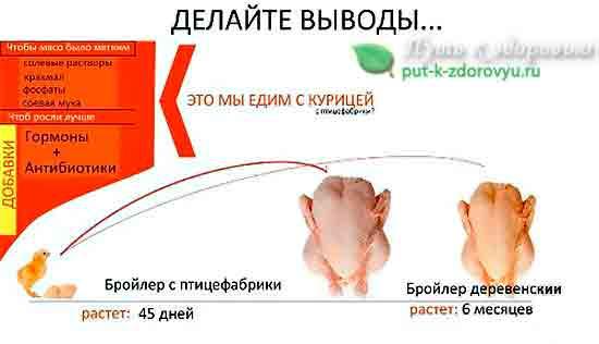 Что мы едим с курицей?