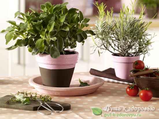 Какие ароматические травы нужно держать дома?