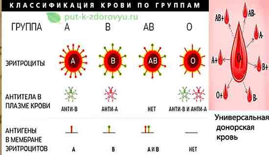Klassifikatsiya_krovi_po_gruppam