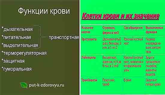 Kletki_i_funktsii_krovi