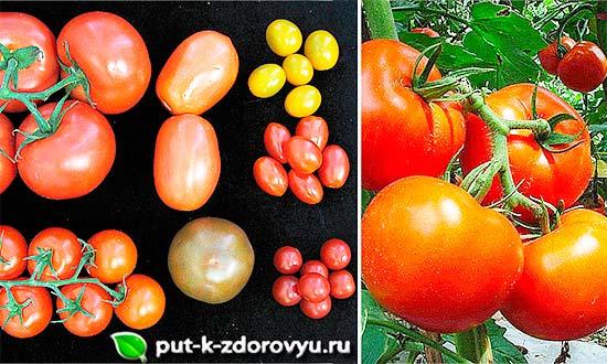 Помидоры. Вред и польза томата-3