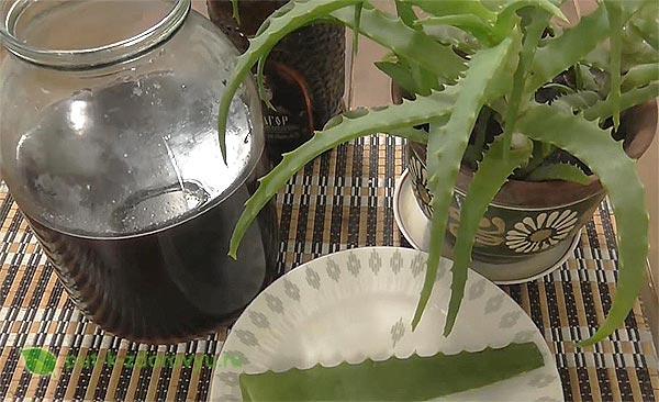 Рецепт с алоэ, вином и мёдом-4