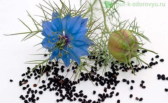 Польза семян чернушки для здоровья.