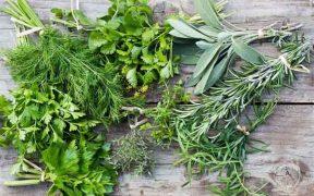 Аватар-Ароматические травы. Советы и рецепты.