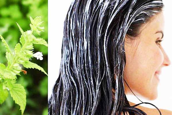 Аватар-Мята перечная для волос и кожи.