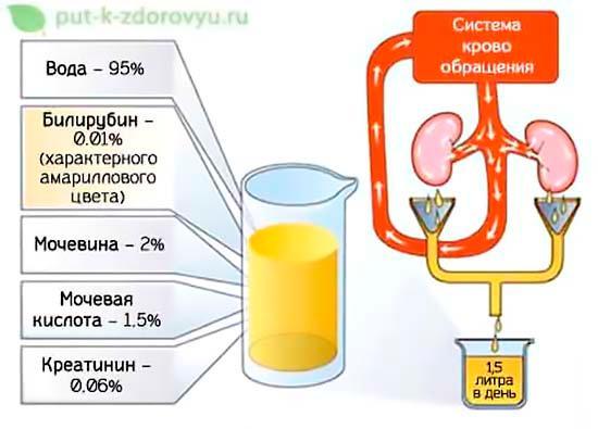 Химический состав мочи.
