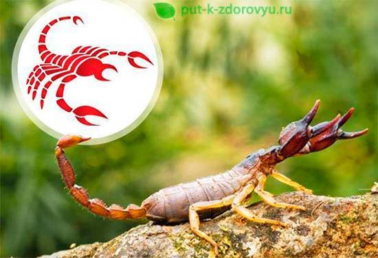 Гороскоп 2020. Знак Зодиака Скорпион в китайском новом году Крысы 2020.