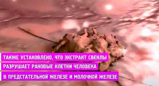 Ekstrakt_sveklyi_razrushaet_rakovyie_kletki_v_predstatelnoy_i_molochnoy_zhelezah