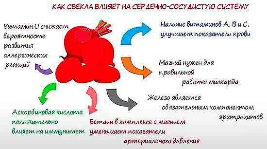 Kak_svekla_vliyaet_na_serdechno_sosudistuyu_sistemu