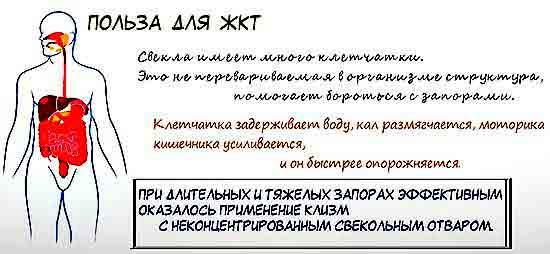 Polza_sveklyi_pischevareniyu