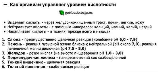 Kak_organizm_upravlyaet_kontsentratsiey_kislotyi